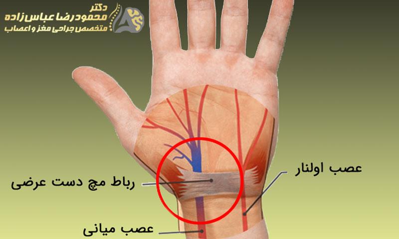 آناتومی دست و اعصاب آن